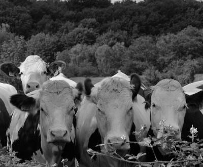 Terrésa - Activités agricoles
